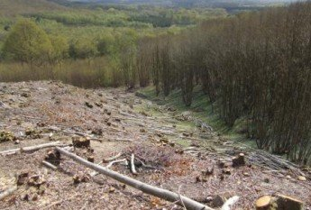 Coppice in West Sussex